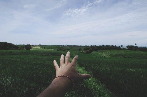 Hand in die Reisfelder auf Bali